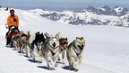 dog-drawn sleigh ride on Glacier 3000 near Gstaad