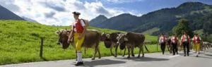 Alpaufzug / Alpabzug in Appenzell, Switzerland - the traditional trek of the cows up to the Alpine pastures and down to the valley