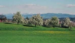 The Thurgau - the land of a thousand and one apple trees...