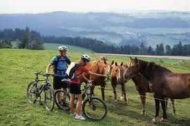 The Franches Montagnes of the Jura - the place for outdoor activities and horses