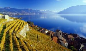 Vineyards on the Swiss shores of Lake Geneva